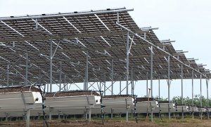 Brite Solar Pilot Blueberry Cultivation Setup with Solar Glass